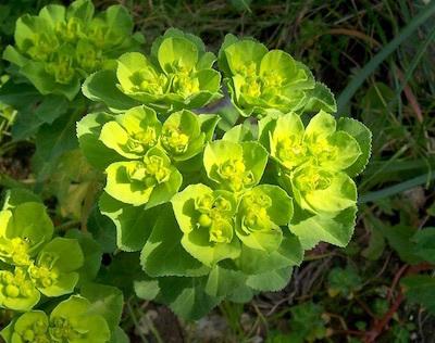 前には平行植物と鼻行類、ふりむけば燈台草。_c0109850_13482735.jpeg