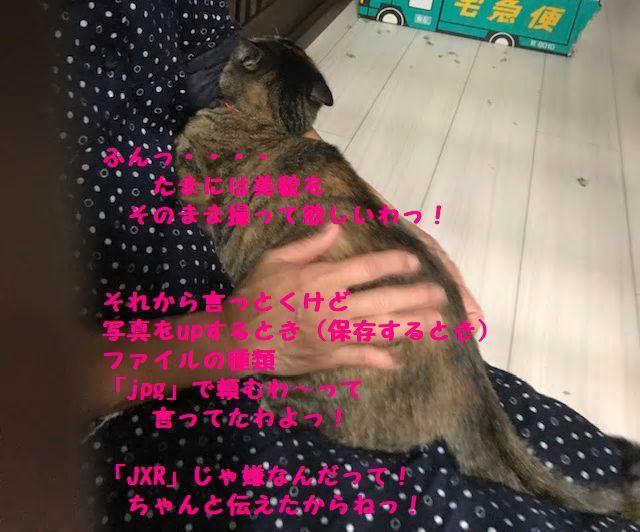 b0061787_12330928.jpg