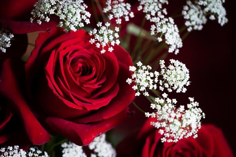 真紅の薔薇_d0353489_00200992.jpg