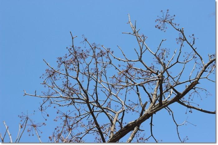 春を探して②('19・3・18-19)_f0146493_15502143.jpg