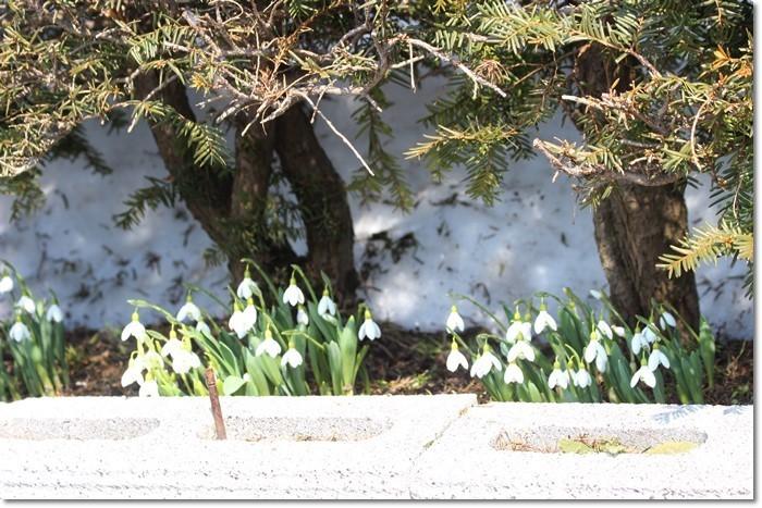 春を探して②('19・3・18-19)_f0146493_15503306.jpg