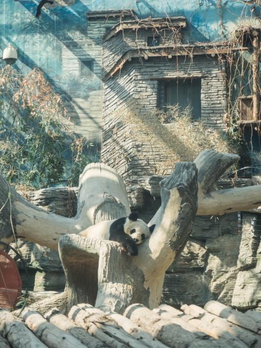 2019北京・万里の長城vol.3~北京動物園パンダと南鑼鼓巷~_f0276498_23542294.jpg