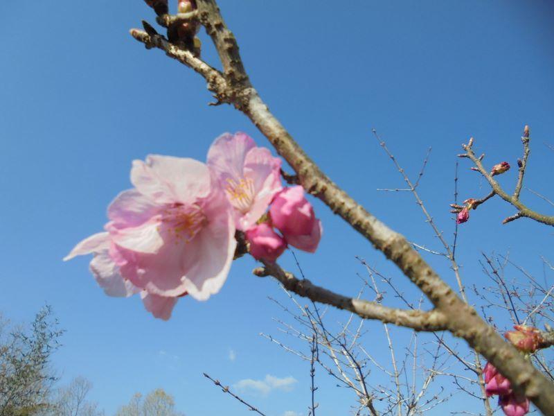 春の予感 2_a0208899_09344177.jpg