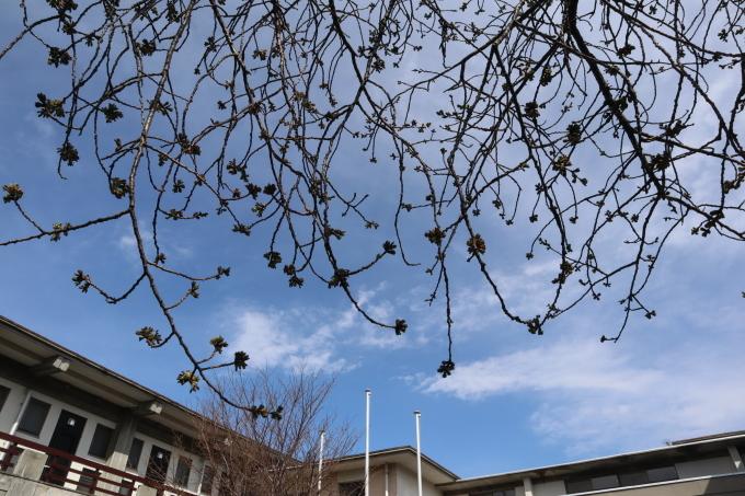 春の足音   うんと_b0239402_17175098.jpg