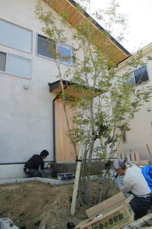 「飛香台の家」植栽工事_b0179213_21311706.jpg