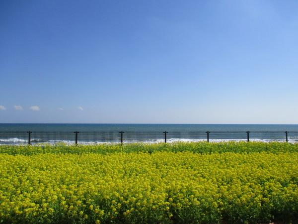 元気村、3月のイベントは鴨シー!_e0164724_14085533.jpg