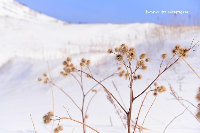 雪解けした澄海岬へ_e0120026_19542531.jpg