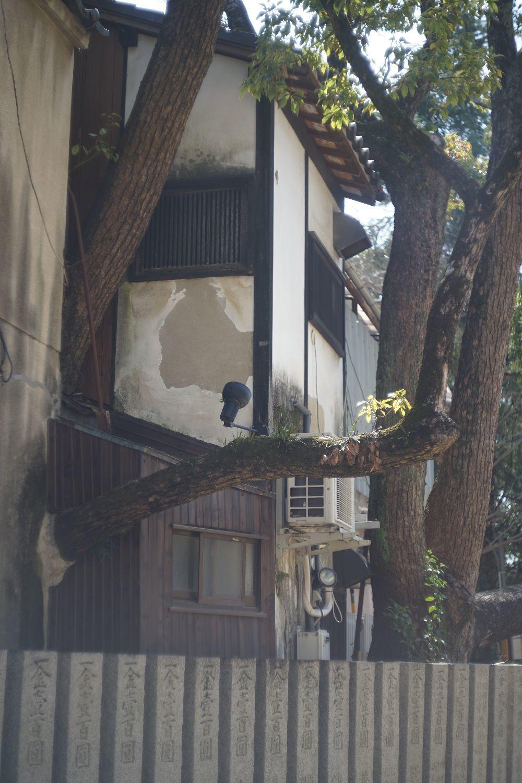 タクマー 58mm F2.4 で 散歩_b0069128_16280238.jpg
