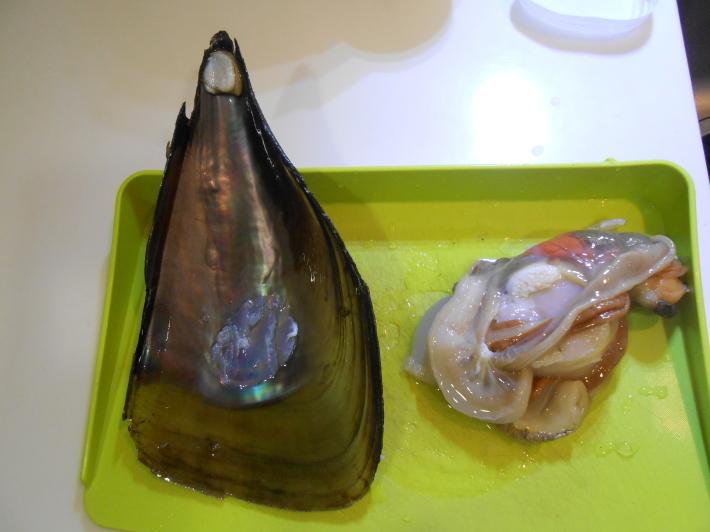 タイラギ(平貝)の貝柱とひも_a0095931_19033424.jpg