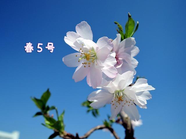 【モラタメ】ダスキン 浴室用浄水シャワー_c0062832_16523524.jpg