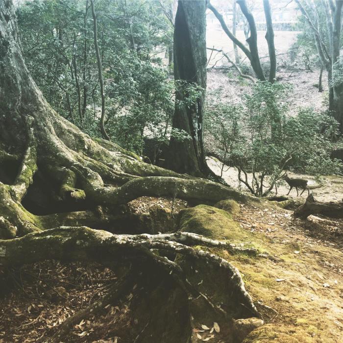 forest_d0210537_16353734.jpg