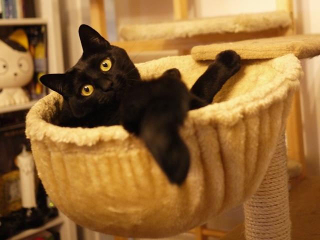ハンモック猫 てぃぁら編。_a0143140_23554561.jpg