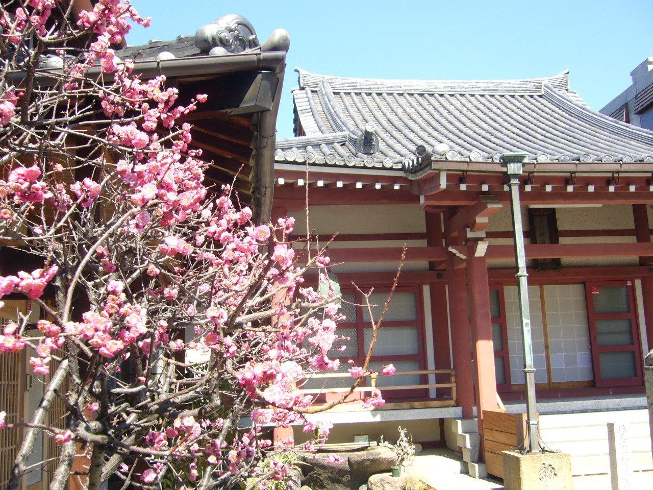 枚方市の寺院 大隆寺_c0112559_09262750.jpg