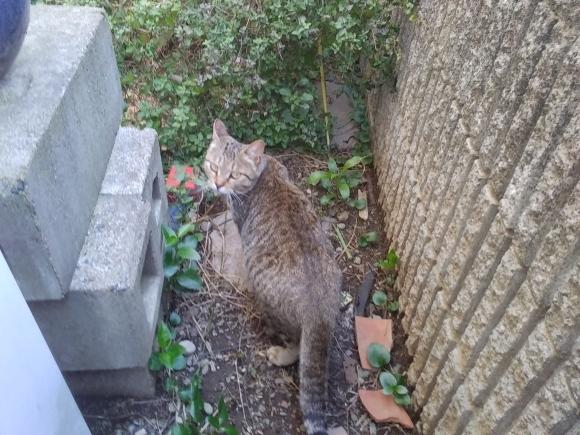 野良猫の運命_d0116059_11281368.jpg