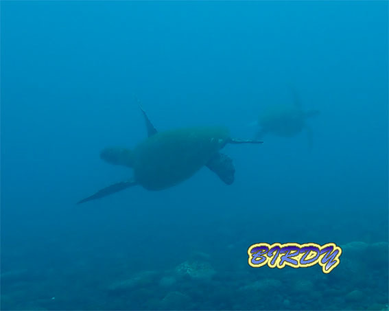 ザトウクジラのソング_e0273365_18012845.jpg