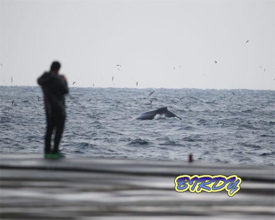 ザトウクジラ_e0273365_18134615.jpg