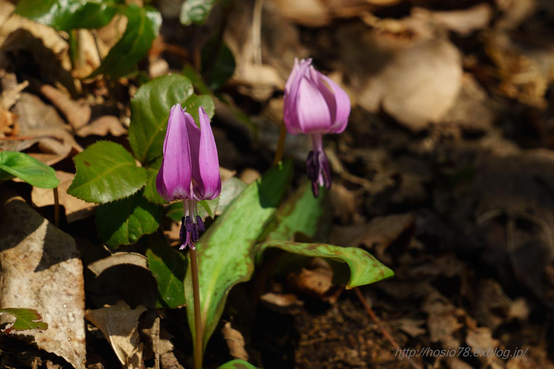 春の妖精たち_e0214470_16394587.jpg