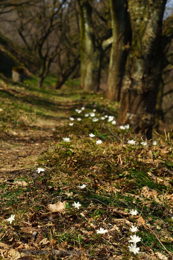 春の妖精たち_e0214470_17155840.jpg