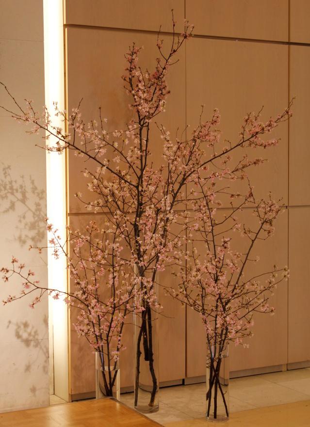 桜・さくら・サクラ_d0079577_13324783.jpg
