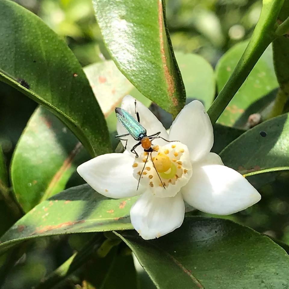春の虫_a0247891_14101514.jpg