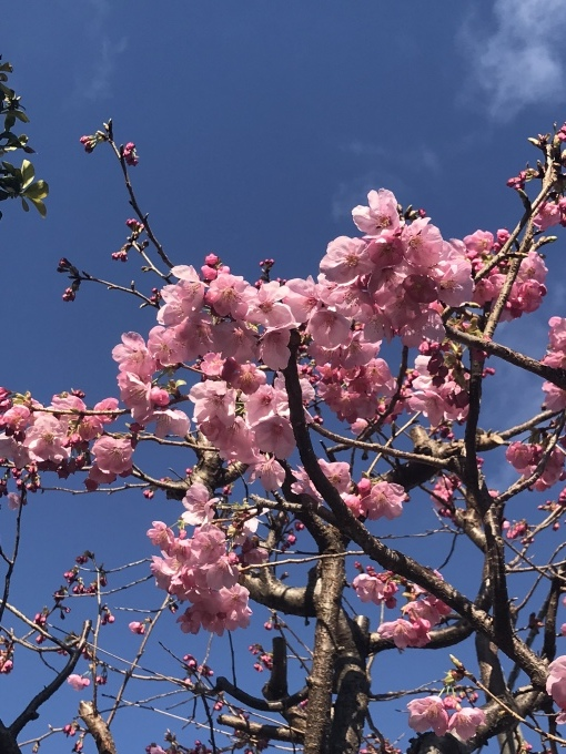 【キナさんぽ】 春のイントロ_f0115311_22205974.jpeg
