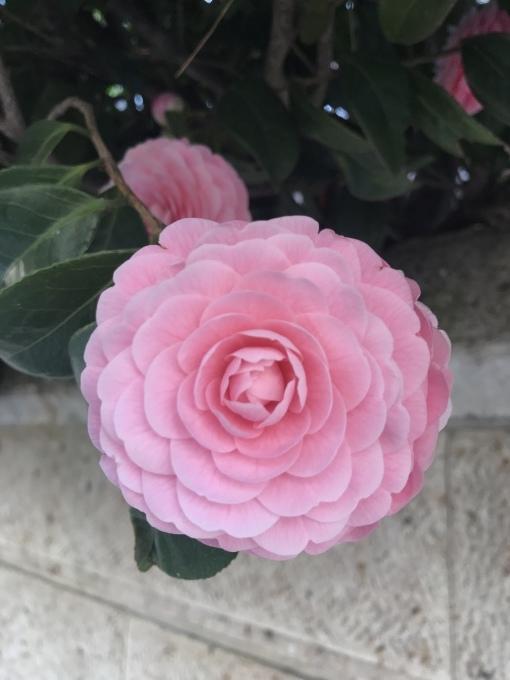【キナさんぽ】 春のイントロ_f0115311_22213199.jpeg