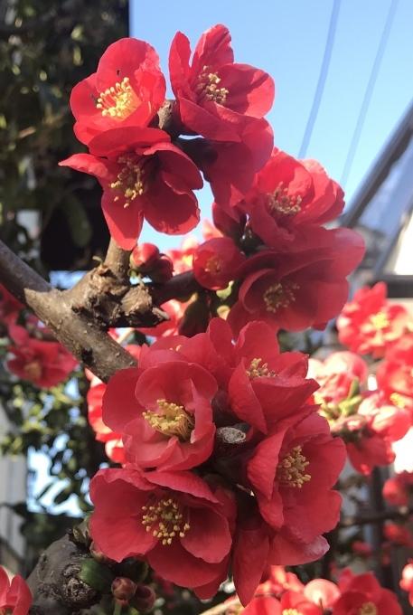 【キナさんぽ】 春のイントロ_f0115311_22222824.jpeg