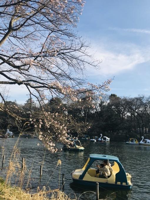【キナさんぽ】 春のイントロ_f0115311_22232241.jpeg