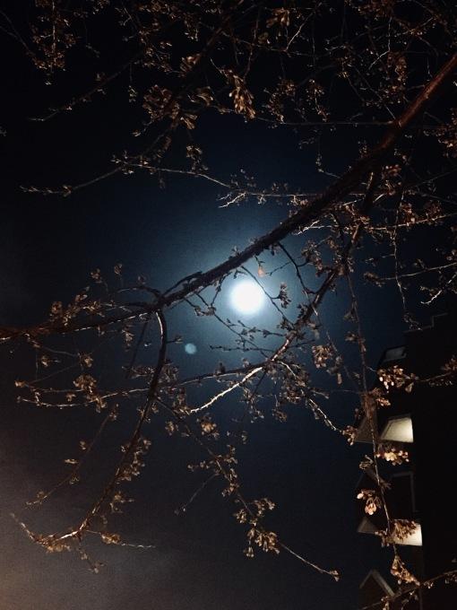 【キナさんぽ】 春のイントロ_f0115311_22241481.jpeg