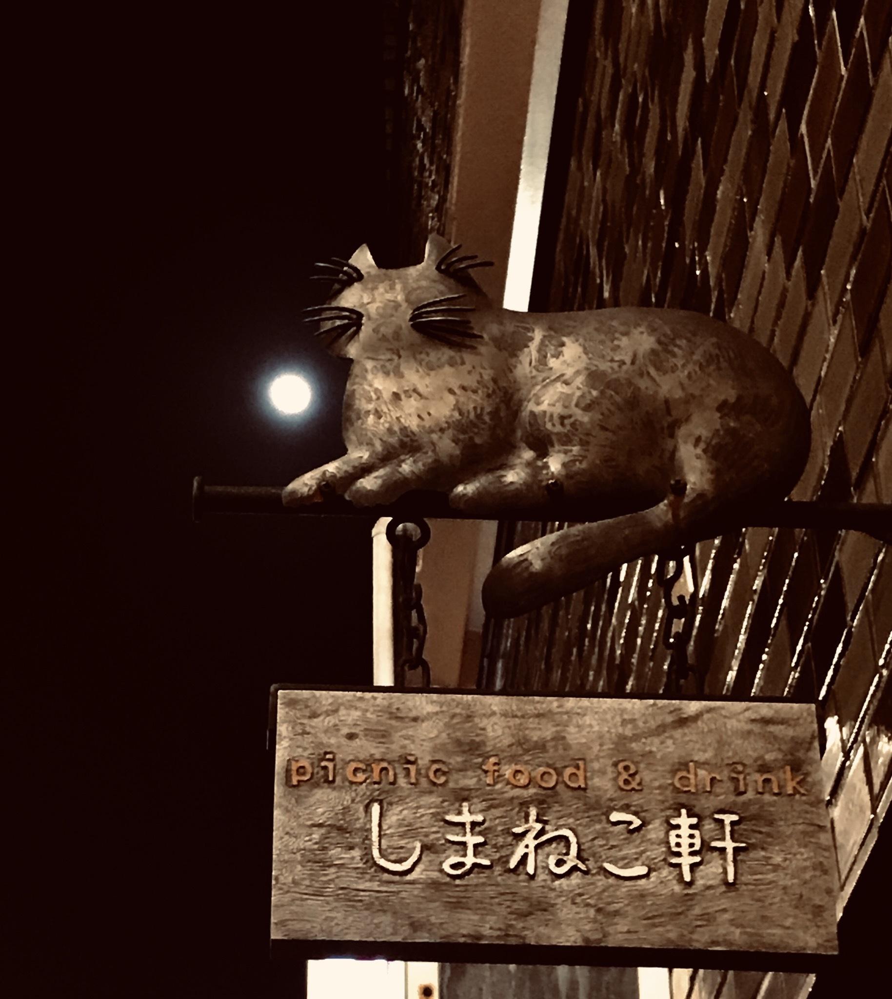 【キナさんぽ】 春のイントロ_f0115311_22242416.jpeg