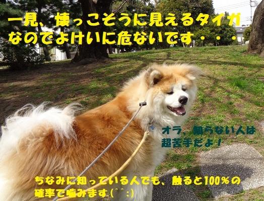 タイガの修行・・・(^^;)_f0121712_22243438.jpg
