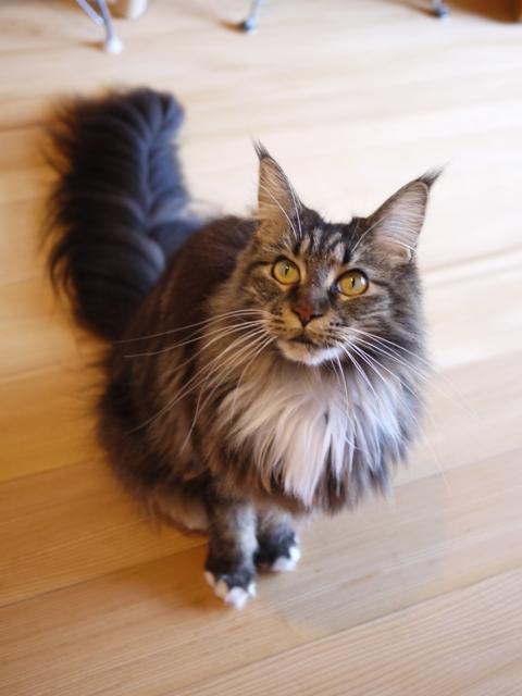猫のお留守番 紙音ちゃん編。_a0143140_22362982.jpg