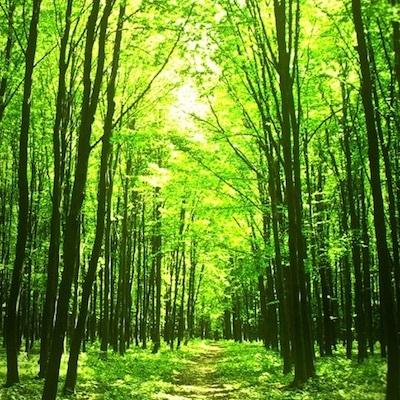 世にも不思議な森の物語/ドアをあけるとタモリが世にもビミョーな物語顔で立っていた。_c0109850_16542941.jpg