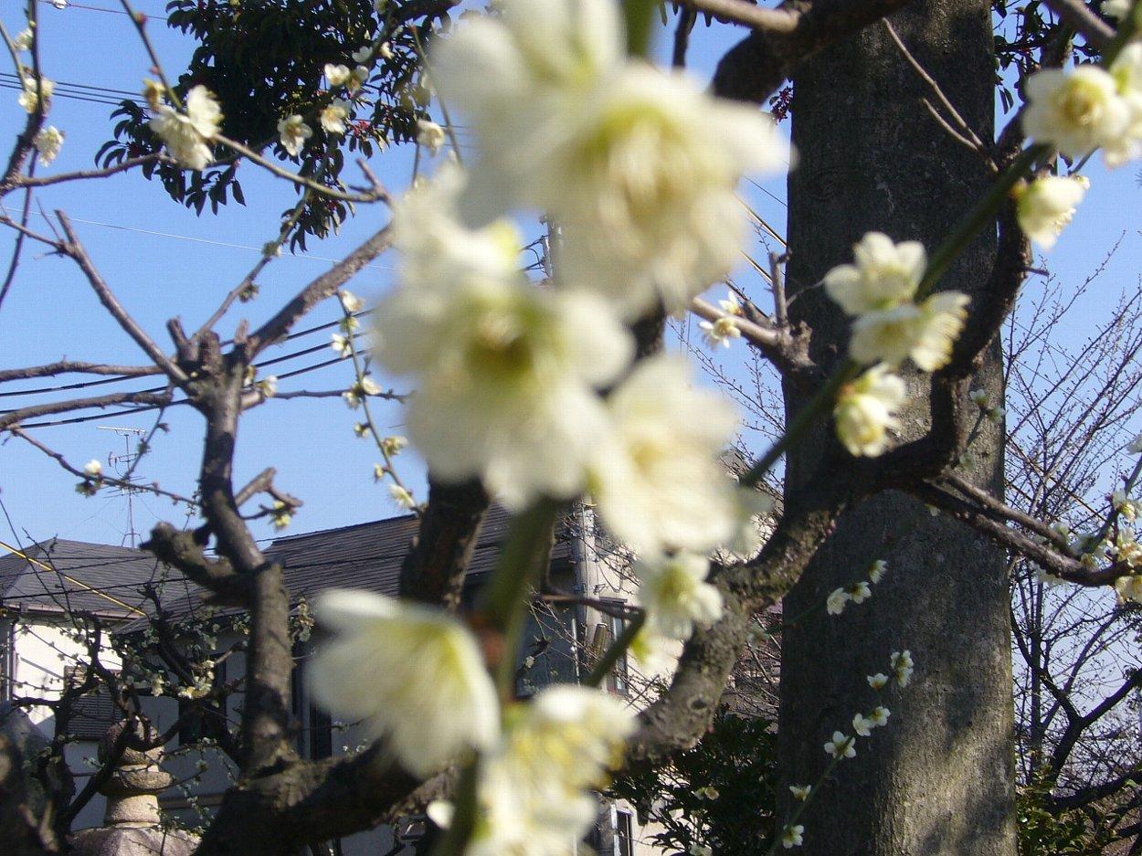 枚方市の神社 百濟王神社_c0112559_08302558.jpg