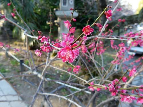 京都・北野天満宮へ行く。_f0232060_1125183.jpg