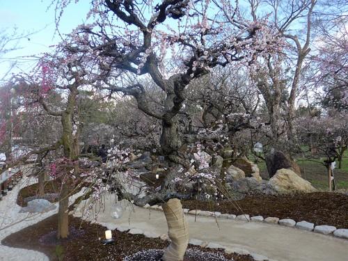 京都・北野天満宮へ行く。_f0232060_11331168.jpg