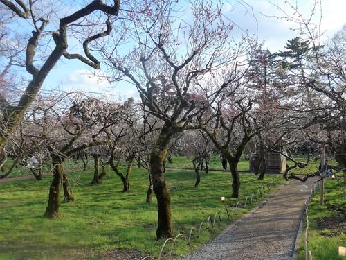 京都・北野天満宮へ行く。_f0232060_11331853.jpg