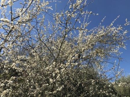春を探そう!_a0136671_04205282.jpg