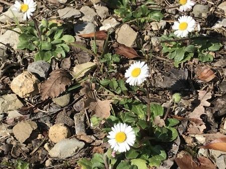 春を探そう!_a0136671_04252754.jpg