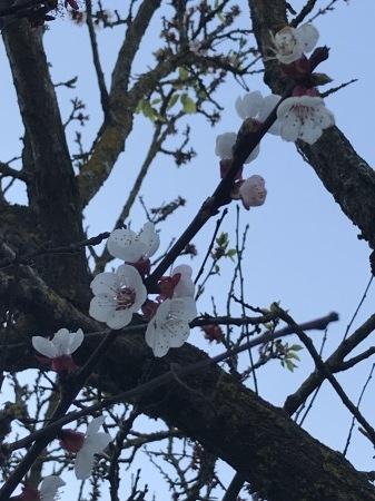 春を探そう!_a0136671_04494638.jpg