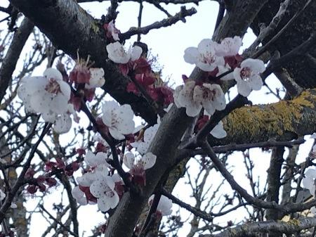 春を探そう!_a0136671_04504843.jpg