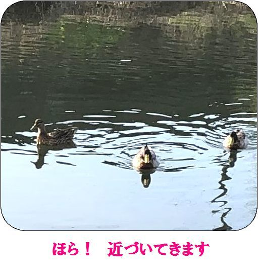 c0025171_00244156.jpg