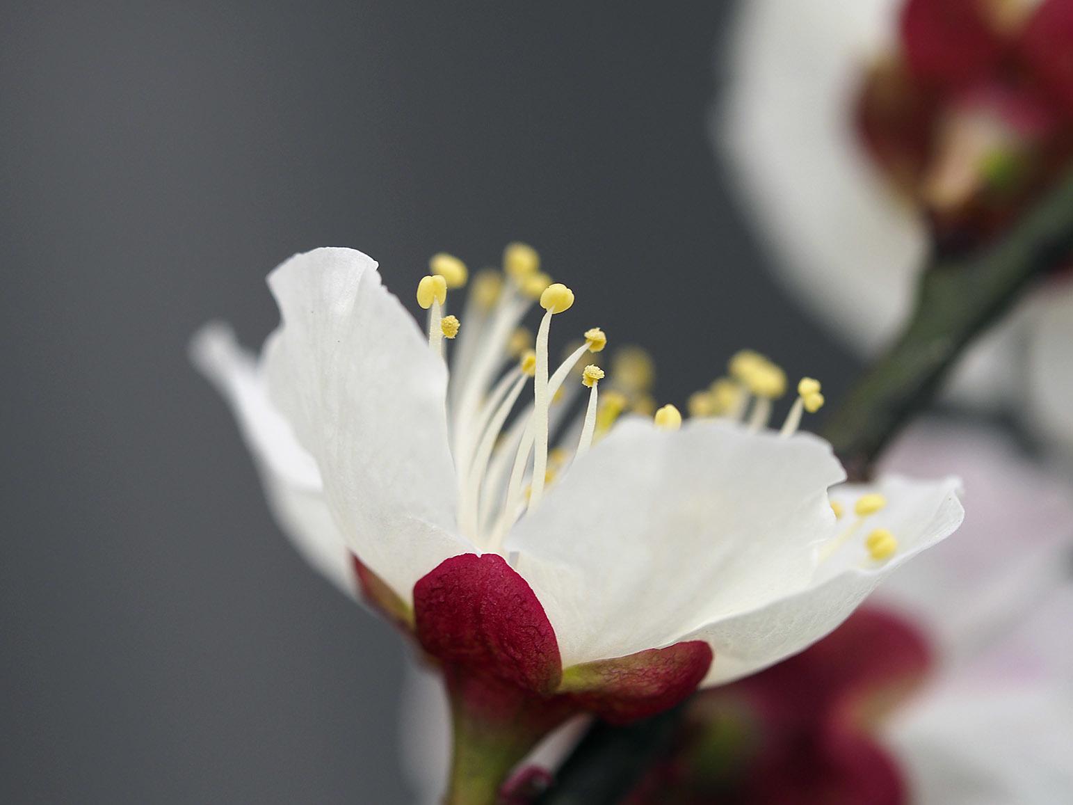 小さな春 2_a0110584_08074941.jpg