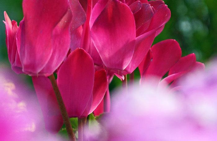 百合が原公園・温室の花・・3_d0162994_08131336.jpg