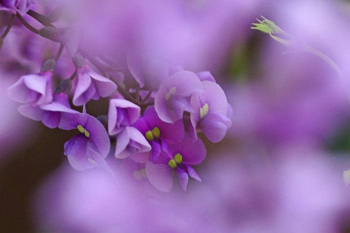 百合が原公園・温室の花・・3_d0162994_08134504.jpg