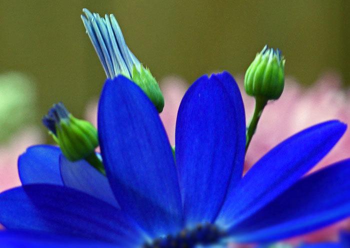 百合が原公園・温室の花・・3_d0162994_08145677.jpg