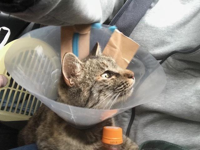 【里親さま募集】置いて行かれた猫8匹-その後-_f0242002_13013979.jpg