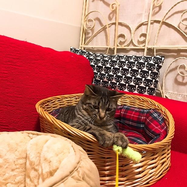 【里親さま募集】置いて行かれた猫8匹-その後-_f0242002_13434026.jpg