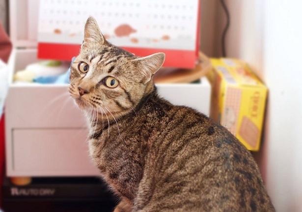 【里親さま募集】置いて行かれた猫8匹-その後-_f0242002_13434403.jpg