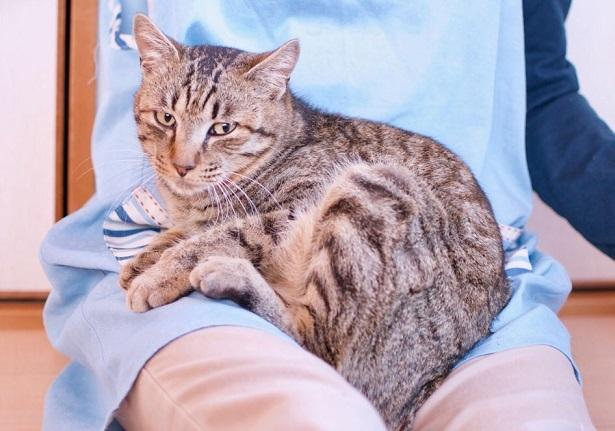 【里親さま募集】置いて行かれた猫8匹-その後-_f0242002_13434789.jpg